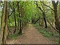 TQ2433 : Buchan Country Park by PAUL FARMER