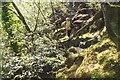 NM6772 : Sunlit woods, Loch Moidart by Jim Barton