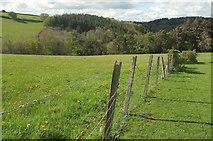 SX8281 : Woods near Great Rock Farm by Derek Harper