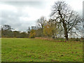 TQ2156 : Field west of Ebbisham Lane by Robin Webster