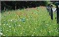 NZ2740 : Botanic Garden Scene by Gordon Griffiths