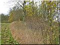 TQ2156 : Hedge west from Ebbisham Lane by Robin Webster