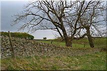 SK2077 : Field above Eyam Edge by David Martin