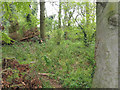TL8999 : Overgrown scrub woodland by David Pashley