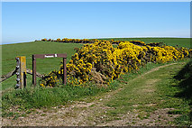 NJ8564 : Path to Pennan by Anne Burgess
