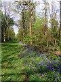 SU7295 : A bluebell lined ride in Cowleaze Wood by Steve Daniels