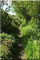 ST4217 : Path from North Street by Derek Harper