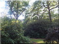 TQ1971 : Rhododendrons in Isabella Plantation by Hamish Griffin