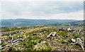 NT2437 : Clear-felled plantation at summit of Cademuir Hill by Trevor Littlewood