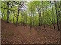 NJ0054 : Darnaway Forest by valenta