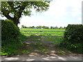 SJ5050 : Field entrance off Coach Road, Ashtons-cross by JThomas