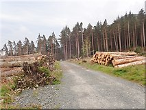 J3629 : Forestry Road heading towards the Glen River and the disused Thomas's Mountain Granite Quarry by Eric Jones