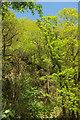 SS6119 : Wooded quarry, Gratleigh Wood by Derek Harper