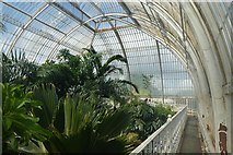 TQ1876 : Walkway in the Palm House by DS Pugh