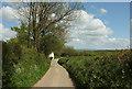 SS5721 : Lane past North Heale by Derek Harper