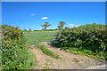 SS5529 : North Devon : Grassy Field & Gate by Lewis Clarke
