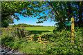 SS5529 : North Devon : Grassy Field by Lewis Clarke