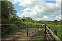 SS5721 : Sheep pasture above Chapple Wood by Derek Harper