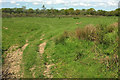 SS5921 : Field, Boreat Moor by Derek Harper
