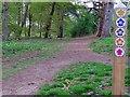 SU2594 : Footpath in Badbury Forest by Steve Daniels