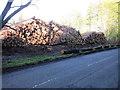 NO3105 : Logs in Dykehead Wood by Scott Cormie