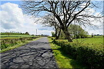 H4965 : Tree shadows, Moylagh by Kenneth  Allen