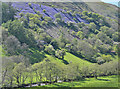 SH8616 : Hillside blues, above Ty'n-y-wern farm by Nigel Brown
