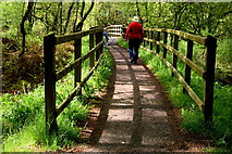 H5776 : Path and footbridge, Loughmacrory Lough by Kenneth  Allen