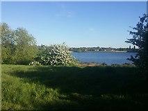 TQ2187 : The Welsh Harp Reservoir, Kingsbury by David Howard