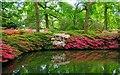 TQ1971 : Richmond : Isabella Plantation pond by Julian Osley