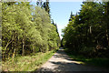 NT1294 : Forest road in Blairadam Forest by Trevor Littlewood