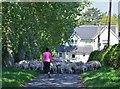 NT7235 : Moving the flock, Berryhill by Jim Barton