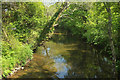 SX7248 : River Avon at Loddiswell by Derek Harper