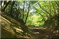 SX7349 : Railway cutting, Woodleigh Wood by Derek Harper