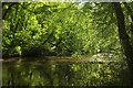 SX7349 : River Avon, Woodleigh Wood by Derek Harper