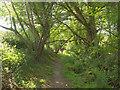 SX7248 : Footpath approaching Reads Farm by Derek Harper