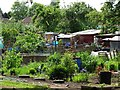 SK5705 : Groby Road Allotments by Ian Calderwood