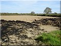 SM9814 : Potato field near Uzmaston by Philip Halling