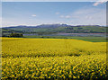NH5757 : Yellow fields, by Ferintosh by Craig Wallace