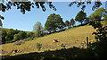 SX7957 : Field above Luscombe by Derek Harper