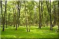 NH5043 : Balblair Wood by Julian Paren