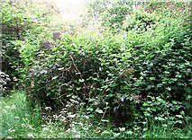 TG2408 : Overgrown monument in Section F by Evelyn Simak