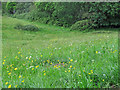 TQ6793 : Wild Flowers in Mill Meadows, Billericay by Roger Jones