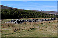 NC8925 : Sheepfold at Upper Suisgill by Chris Heaton