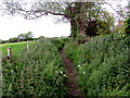 ST6092 : Dried-up rhine near Featherbed Lane, Oldbury-on-Severn by Jaggery