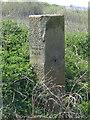 SJ3069 : Hawarden/Englefield Lordship/Flint Boundary Stone near the River Dee (east face) by John S Turner