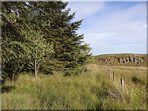 NY7969 : Copse on Ridley Common by Rudi Winter