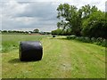 SO8351 : Silage bales in a meadow by Philip Halling
