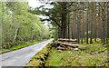 NO2894 : Woodland beside B976 by Trevor Littlewood