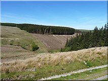 SJ0131 : A cleared forestry block above Cwm Pennant by Richard Law